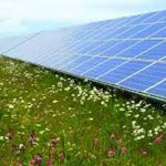 The juxtaposition of solar panels and wildflowers Intentional Imagination